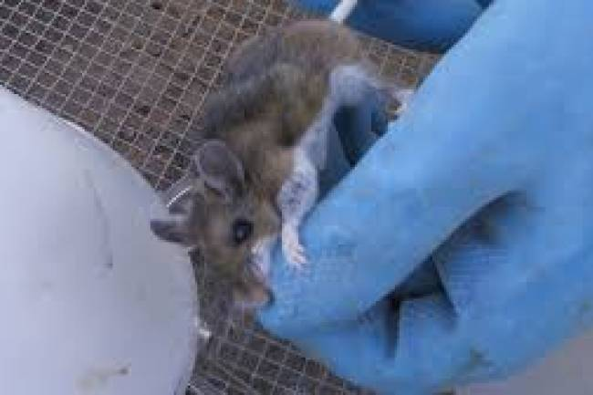 Man dies from hantavirus in China: All you need to know about the virus, and how it spreads